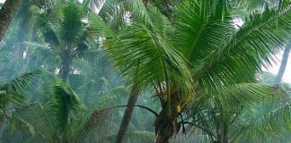 Kerala Rain : Train Updates